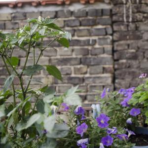 Urban Gardening in Offenbach
